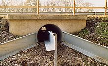 Tunnel for toads