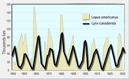 A line graph of the number of Canada lynx furs sold to the Hudson's Bay Company on the vertical axis against the numbers of snowshoe hare on the horizontal axis for the period 1845 to 1935