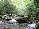 西蒂科溪原野中的西蒂科溪