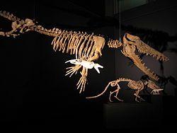 Ambulocetus et pakicetus.jpg