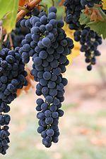 Wine grapes03.jpg