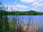 本顿湖四周的森林
