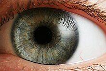 """""""a human eye"""""""