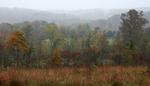 胡希尔国家森林大雾弥漫的山岭