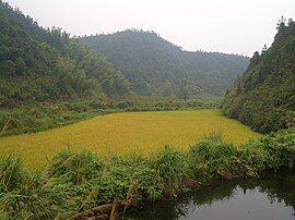 Hengshitan-roadside-pond-and-rice-field-9945.jpg