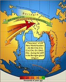 Schematic illustration of maternal geneflow in and out of Beringia. Colours of the arrows correspond to approximate timing of the events and are decoded in the coloured time-bar. The initial peopling of Berinigia (depicted in light yellow) was followed by a standstill after which the ancestors of indigenous Americans spread swiftly all over the New World while some of the Beringian maternal lineages–C1a-spread westwards. More recent (shown in green) genetic exchange is manifested by back-migration of A2a into Siberia and the spread of D2a into north-eastern America that post-dated the initial peopling of the New World.
