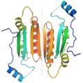 P19 protein dimer