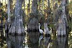 Everglades National Park cypress.jpg