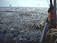 Photo of hundreds of seabirds on water surface around boat