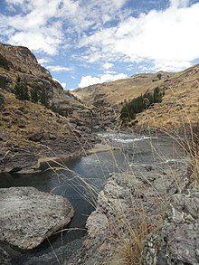 Festuca dolichophylla o Q'oya o Chillihua sobre el río apurímac.JPG