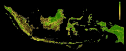 FLII Indonesia.png