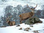 The Deer Park, Glengoulandie - geograph.org.uk - 136680.jpg