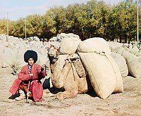 Turkmen man with camel.jpg