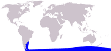 Cetacea range map Spectacled Porpoise.PNG