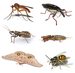 Insect collage.png