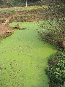 example of algal bloom