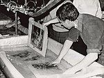 National Library manuscripts being washed in Florence after the 1966 flood of the Arno - UNESCO - PHOTO 0000001407 0001 - Restoration.jpg