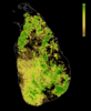 FLII SriLanka.png