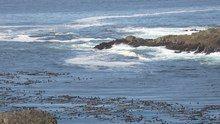 File:Sea Foam off Amphitrite Point near Ucluelet.webm