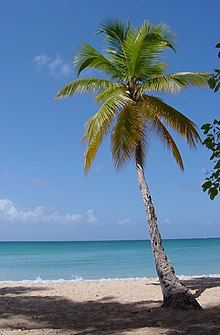1859-Martinique.web.jpg