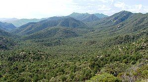 Coronado Natl Forest Nima1.JPG