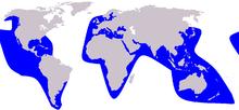 Cetacea range map False Killer Whale.PNG