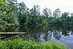 尤华瑞国家森林中的一座池塘。