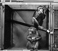 77-cm primate cage.jpg