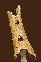 A hollow piece of bone with two circular holes
