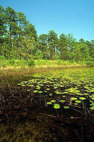 Patsy pond croatan nf.jpg