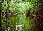Congaree swamp.jpg
