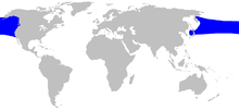 Cetacea range map Stejneger sBeaked Whale.png