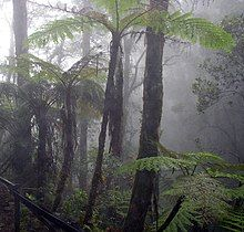 Cloud forest mount kinabalu.jpg