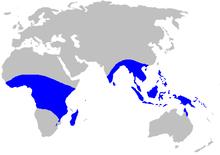 Map-Musaceae.PNG