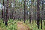 松林中的步道