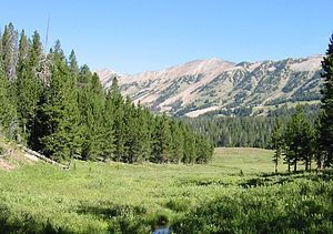 Gallatin National Forest.jpg