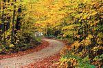 秋季,哈普古德池塘休闲区一条路旁的的树木