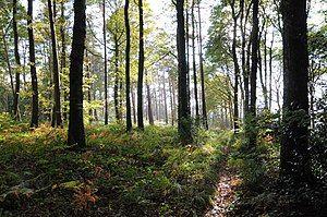 Forêt Domaniale de Desvres automne.jpg