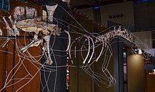 Mounted partial skeleton of a spinosaurid dinosaur with a wave-like sail at a museum