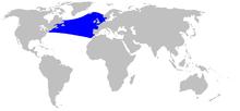 Cetacea range map Sowerbys Beaked Whale.png