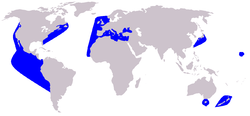 Cetacea range map Short-beaked Common Dolphin.PNG