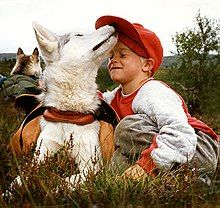 A white dog in a harness playfully nuzzles a young boy