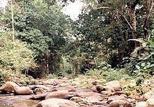 La Trilla, Rio Ocumare, Aragua - Venezuela.jpg