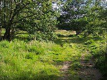 Footpath on Wimbledon Common - geograph.org.uk - 879675.jpg