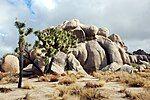 Joshua Tree - Rock formation in Real Hidden Valley 1.jpg
