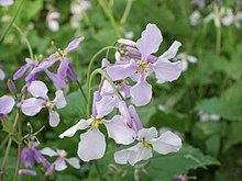 Beihai-flower.JPG