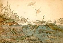 Watercolour of prehistoric animals and plants living in the sea and on the nearby shore; foreground figures include pterosaurs fighting in the air above the sea and an ichthyosaur byting into the long neck of a plesiosaur.
