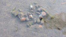 File:Seashells living in Persian Gulf.ogv