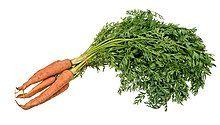 Vegetable-Carrot-Bundle-wStalks.jpg