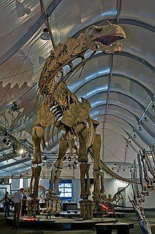 Argentinosaurus DSC 2943.jpg